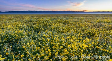 Wildflowers bloom across Carrizo Plains National Monument, during the 2017 Superbloom, Carrizo Plain National Monument, California