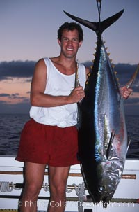 Yellowfin tuna, Roca Partida., natural history stock photograph, photo id 03466
