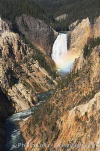A rainbow appears in the mist of the Lower Falls of the Yellowstone River.  At 308 feet, the Lower Falls of the Yellowstone River is the tallest fall in the park.  This view is from the famous and popular Artist Point on the south side of the Grand Canyon of the Yellowstone.  When conditions are perfect in midsummer, a morning rainbow briefly appears in the falls, Yellowstone National Park, Wyoming