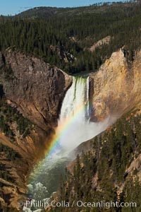 Yellowstone Falls viewed from Lookout Point with a rainbow.  Lower Yellowstone Falls cascades 308' in a thundering plunge into the Grand Canyon of the Yellowstone River, Yellowstone National Park, Wyoming