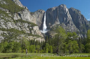 Yosemite Falls rises above Cooks Meadow.  The 2425 falls, the tallest in North America, is at peak flow during a warm-weather springtime melt of Sierra snowpack.  Yosemite Valley, Yosemite National Park, California