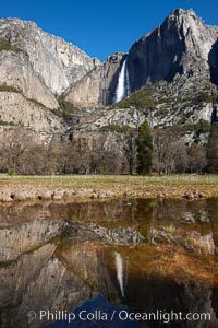 Yosemite Falls reflected in springtime pond, Cook's Meadow, Yosemite National Park, California