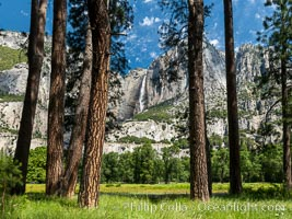 Yosemite Falls framed by Pine Trees, Cook's Meadow, Yosemite National Park
