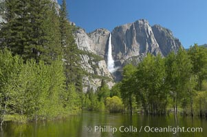 Yosemite Falls rises above the Merced River, viewed from the Swinging Bridge.  The 2425 falls is the tallest in North America.  Yosemite Valley. Yosemite Falls, Yosemite National Park, California, USA, natural history stock photograph, photo id 16144