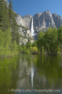 Yosemite Falls rises above the Merced River, viewed from the Swinging Bridge.  The 2425 falls is the tallest in North America.  Yosemite Valley. Yosemite Falls, Yosemite National Park, California, USA, natural history stock photograph, photo id 16145