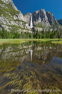 Yosemite Falls reflected in flooded meadow.  The Merced  River floods its banks in spring, forming beautiful reflections of Yosemite Falls. Yosemite National Park, California, USA, natural history stock photograph, photo id 26888
