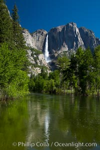 Yosemite Falls reflected in the Merced River, from Swinging Bridge.  The Merced  River is flooded with heavy springtime flow as winter snow melts in the high country above Yosemite Valley, Yosemite National Park, California