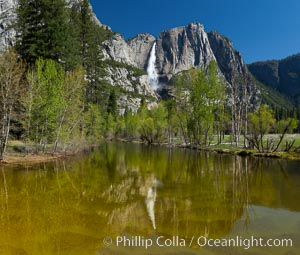 Yosemite Falls rises above the Merced River, viewed from the Swinging Bridge. The 2425' falls is the tallest in North America, Yosemite National Park, California