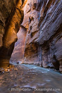 The Virgin River Narrows, where the Virgin River has carved deep, narrow canyons through the Zion National Park sandstone, creating one of the finest hikes in the world. Virgin River Narrows, Zion National Park, Utah, USA, natural history stock photograph, photo id 32615