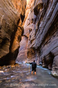 The Virgin River Narrows, where the Virgin River has carved deep, narrow canyons through the Zion National Park sandstone, creating one of the finest hikes in the world