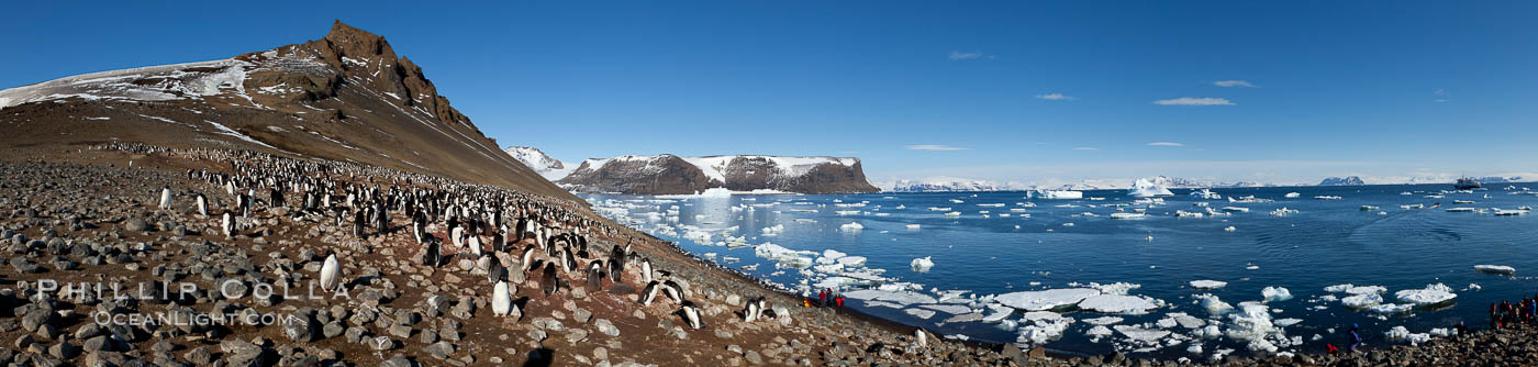 Adelie penguin colony, panoramic photograph. Devil Island, Antarctic Peninsula, Antarctica, Pygoscelis adeliae, natural history stock photograph, photo id 26314