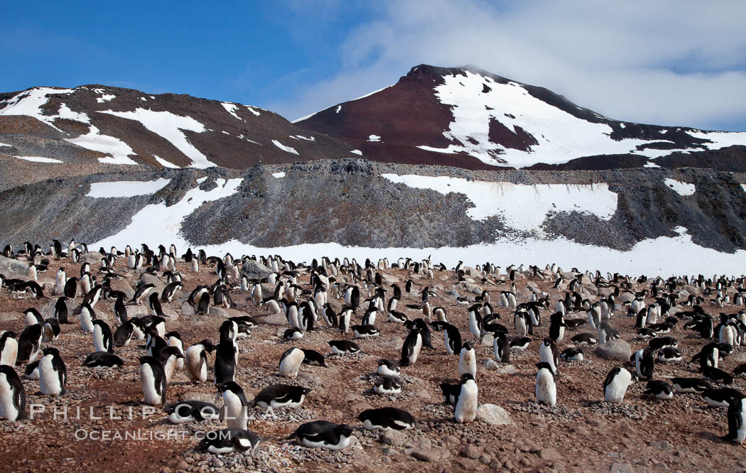 Adelie penguins, nesting, part of the enormous colony on Paulet Island, with the tall ramparts of the island and clouds seen in the background. Adelie penguins nest on open ground and assemble nests made of hundreds of small stones. Antarctic Peninsula, Antarctica, Pygoscelis adeliae, natural history stock photograph, photo id 26362