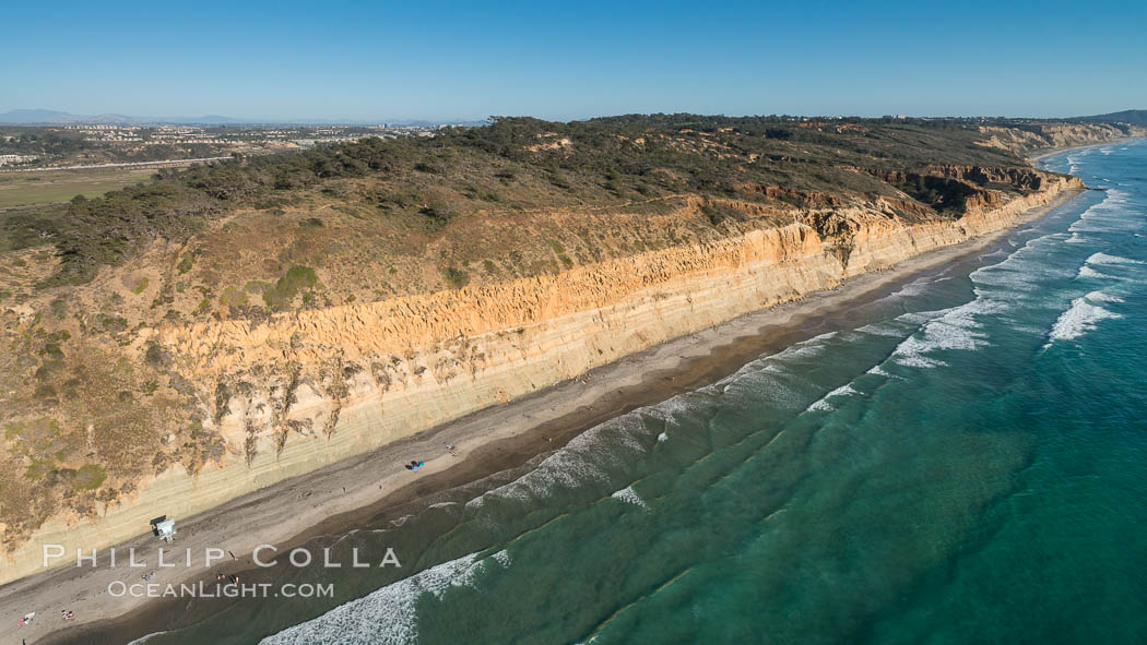 Torrey Pines seacliffs, rising up to 300 feet above the ocean, stretch from Del Mar to La Jolla. On the mesa atop the bluffs are found Torrey pine trees, one of the rare species of pines in the world., natural history stock photograph, photo id 30734