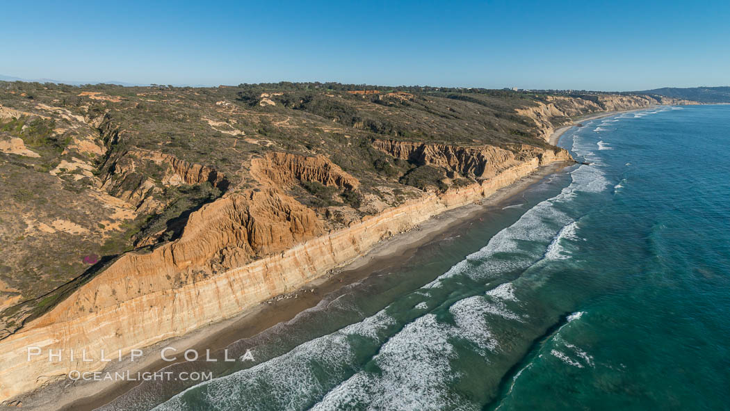 Torrey Pines seacliffs, rising up to 300 feet above the ocean, stretch from Del Mar to La Jolla. On the mesa atop the bluffs are found Torrey pine trees, one of the rare species of pines in the world., natural history stock photograph, photo id 30735