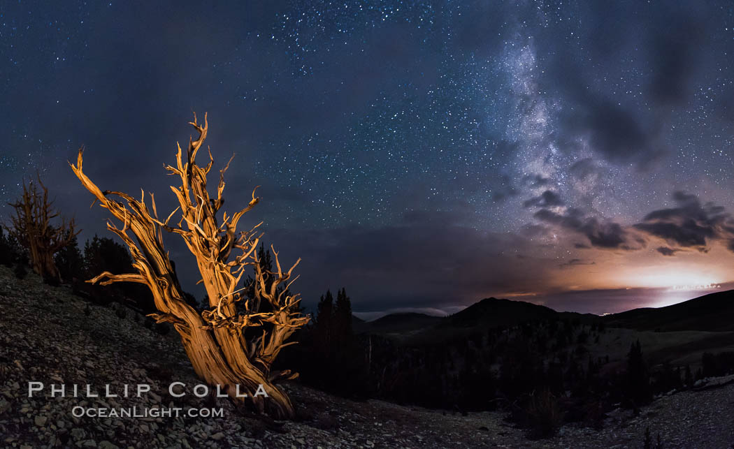 Image 28782, Ancient Bristlecone Pine Tree at night, stars and the Milky Way galaxy visible in the evening sky, near Patriarch Grove. Ancient Bristlecone Pine Forest, White Mountains, Inyo National Forest, California, USA, Pinus longaeva, Phillip Colla, all rights reserved worldwide. Keywords: ancient, ancient bristlecone, ancient bristlecone pine forest, ancient bristlecone pine tree, astrophotography, bristlecone, bristlecone pine, bristlecone pine tree, california, dolomite, dusk, environment, evening, forest, galaxy, gnarled, great basin bristlecone pine, grove, growth, inyo national forest, landscape astrophotography, lifespan, longevity, methuselah trail, methuselah walk, milky way, milky way galaxy, morning, mountain, national forests, nature, night, nightscape, old, old growth, outdoors, outside, panorama, panoramic photo, pine, pine tree, pinus longaeva, plant, rock, schulman grove, soil, stars, summer, sunrise, terrestrial plant, time, tree, twisted, usa, western bristlecone pine, white mountains, white mountains inyo national forest.