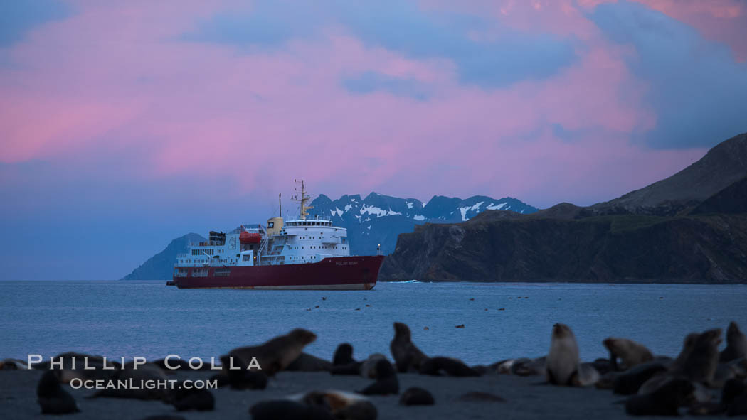 M/V Polar Star, an icebreaker expedition ship, lies at anchor in Right Whale Bay, South Georgia Island.  Antarctic fur seals on the beach, and the rugged South Georgia Island mountains in the distance.  Sunset, dusk. Right Whale Bay, South Georgia Island, Arctocephalus gazella, natural history stock photograph, photo id 24346