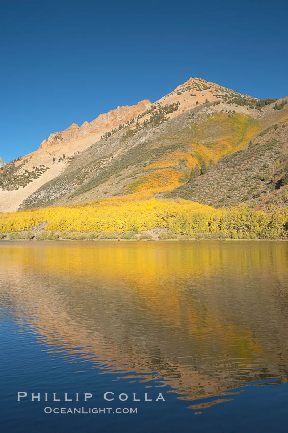 Aspens changing into fall colors, yellow and orange, are reflected in North Lake in October, Bishop Creek Canyon, Eastern Sierra. Bishop Creek Canyon, Sierra Nevada Mountains, California, USA, Populus tremuloides, natural history stock photograph, photo id 17552