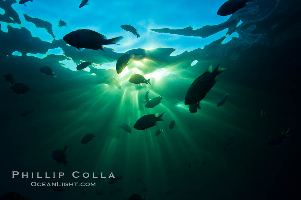 Beautiful underwater sunburst, glittering light through the ocean surface, Sea of Cortez, Baja California, Mexico., natural history stock photograph, photo id 27561