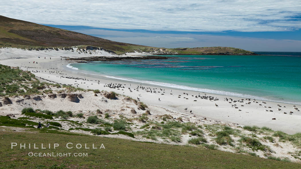 Beautiful white sand beach, on the southern tip of Carcass Island, with gentoo and Magellanic penguins coming and going to sea. Carcass Island, Falkland Islands, United Kingdom, natural history stock photograph, photo id 24062