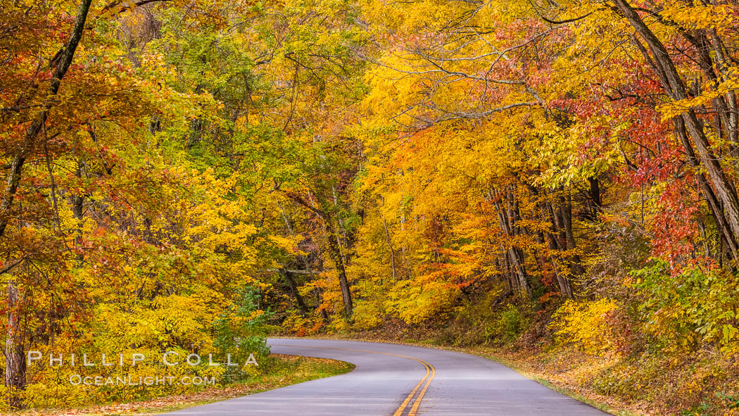 Blue Ridge Parkway Fall Colors, Asheville, North Carolina. USA, natural history stock photograph, photo id 34638