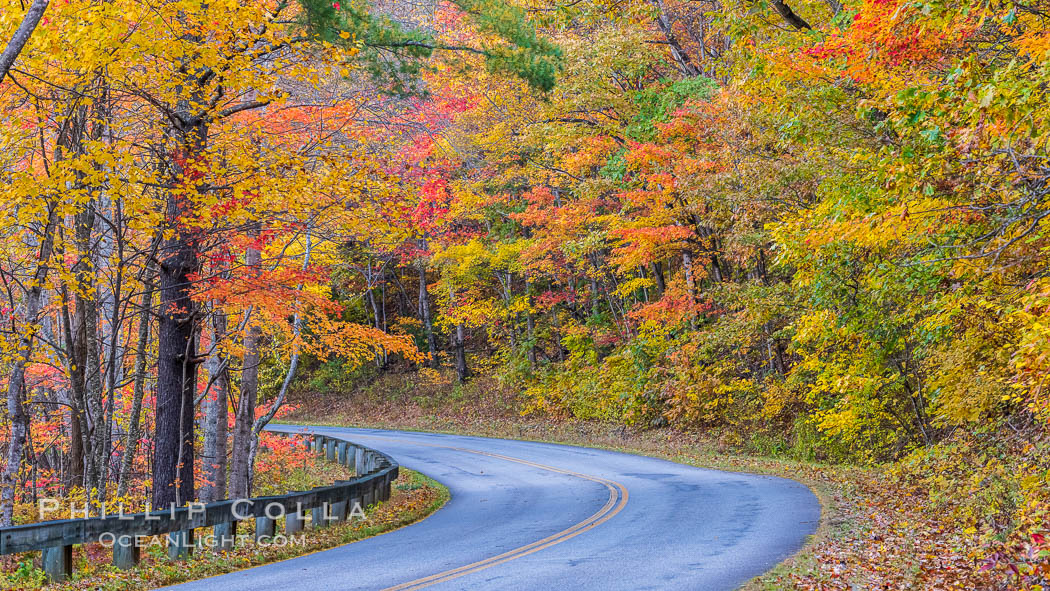 Image 34650, Blue Ridge Parkway Fall Colors, Asheville, North Carolina. USA, Phillip Colla, all rights reserved worldwide.   Keywords: asheville:autumn:blue ridge parkway:blueridge parkway:fall:fall colors:north carolina.