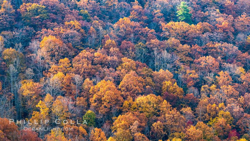 Blue Ridge Parkway Fall Colors, Asheville, North Carolina. Asheville, North Carolina, USA, natural history stock photograph, photo id 34640