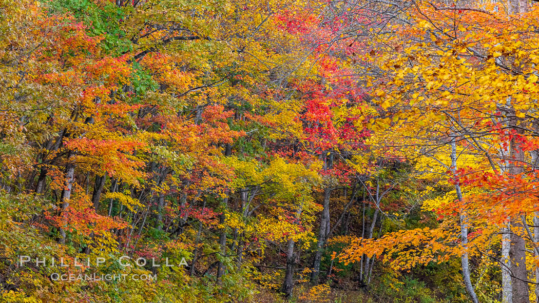 Blue Ridge Parkway Fall Colors, Asheville, North Carolina. Asheville, North Carolina, USA, natural history stock photograph, photo id 34652