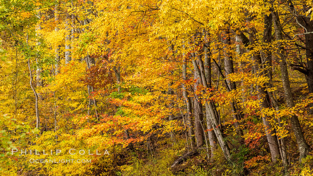 Blue Ridge Parkway Fall Colors, Asheville, North Carolina. Asheville, North Carolina, USA, natural history stock photograph, photo id 34639