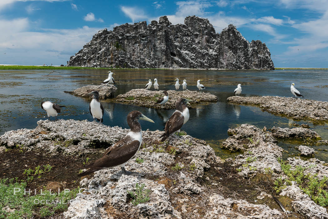 Booby Birds and Clipperton Rock, Lagoon, Clipperton Island. France, natural history stock photograph, photo id 33086