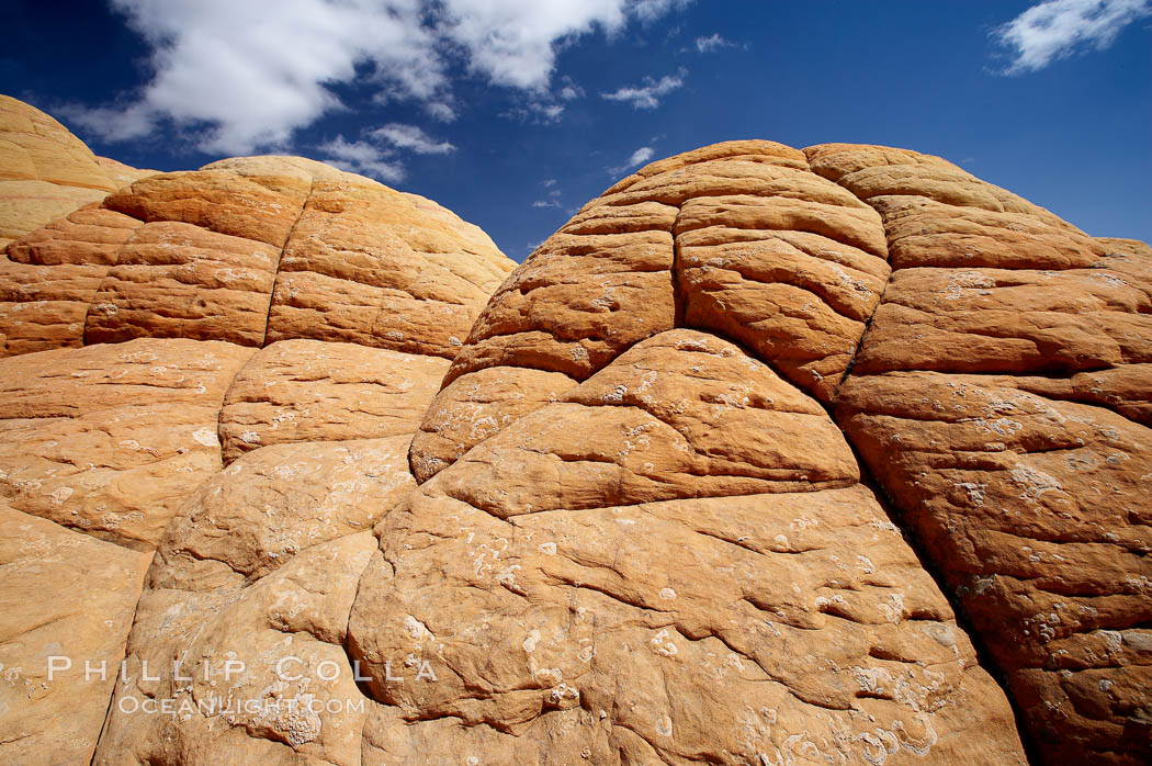 Brain rocks, curious sandstone formations in the North Coyote Buttes. Paria Canyon-Vermilion Cliffs Wilderness, Arizona, USA, natural history stock photograph, photo id 20634