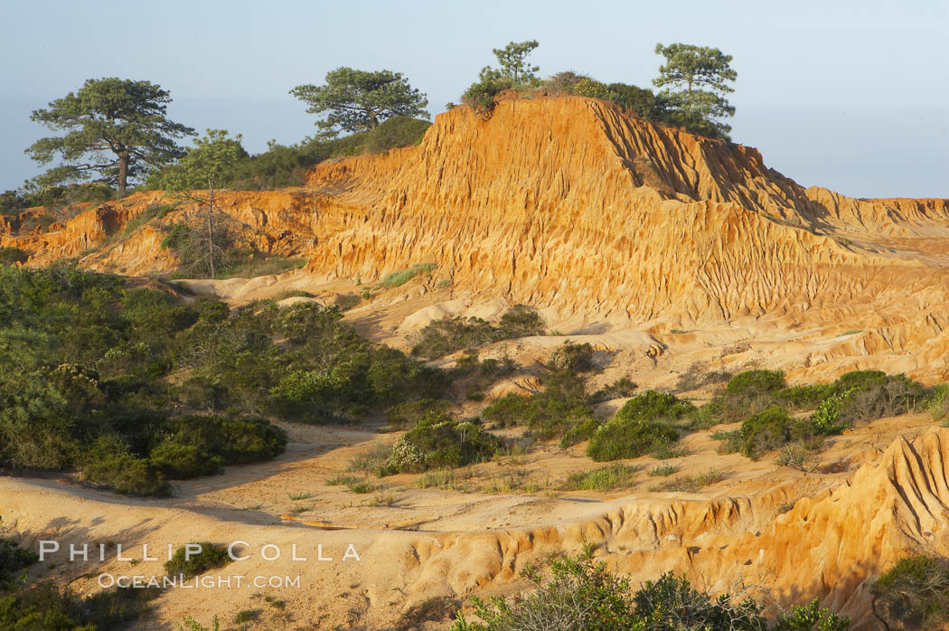 Broken Hill is an ancient, compacted sand dune that was uplifted to its present location and is now eroding. Torrey Pines State Reserve, San Diego, California, USA, natural history stock photograph, photo id 12014