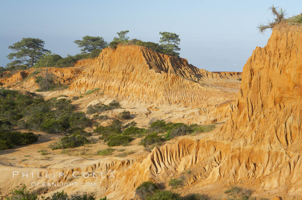Broken Hill is an ancient, compacted sand dune that was uplifted to its present location and is now eroding. Torrey Pines State Reserve, San Diego, California, USA, natural history stock photograph, photo id 12034