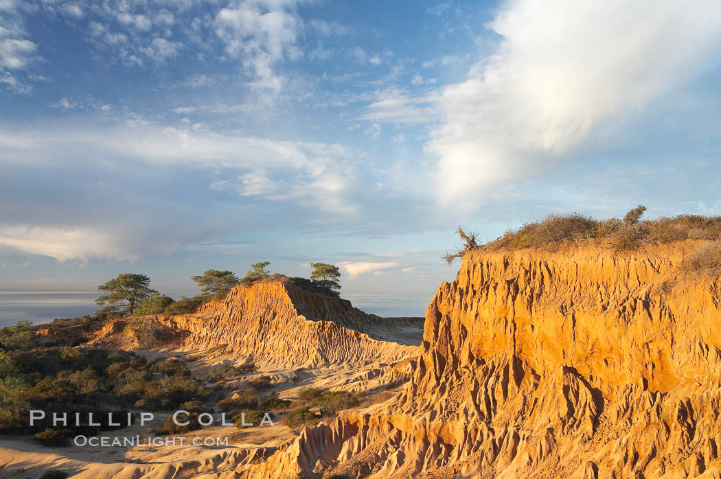 Broken Hill is an ancient, compacted sand dune that was uplifted to its present location and is now eroding. Torrey Pines State Reserve, San Diego, California, USA, natural history stock photograph, photo id 18930