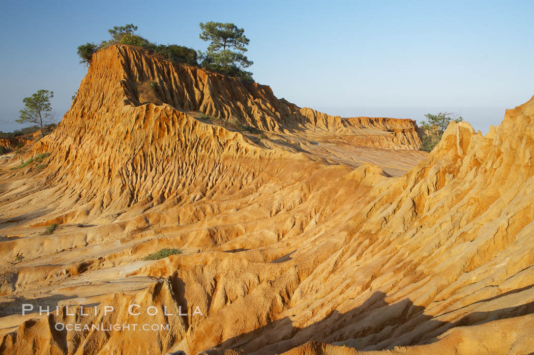 Broken Hill is an ancient, compacted sand dune that was uplifted to its present location and is now eroding. Torrey Pines State Reserve, San Diego, California, USA, natural history stock photograph, photo id 12032