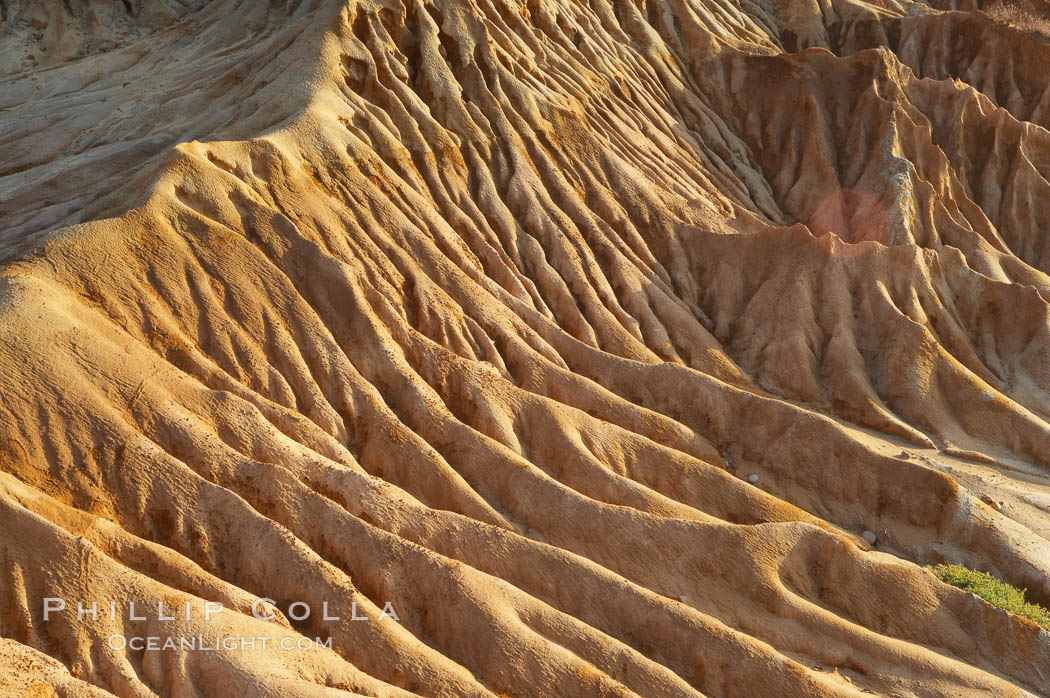 Broken Hill is an ancient, compacted sand dune that was uplifted to its present location and is now eroding. Torrey Pines State Reserve, San Diego, California, USA, natural history stock photograph, photo id 12023