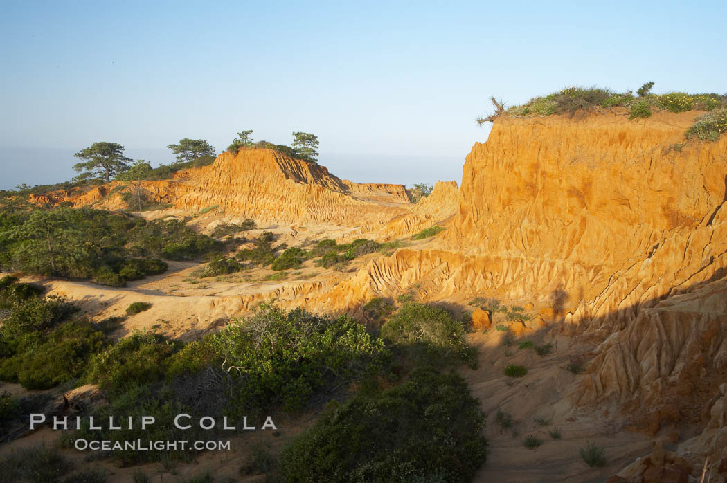 Broken Hill is an ancient, compacted sand dune that was uplifted to its present location and is now eroding. Torrey Pines State Reserve, San Diego, California, USA, natural history stock photograph, photo id 12031