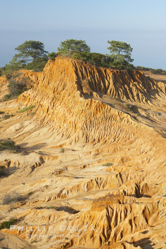 Broken Hill is an ancient, compacted sand dune that was uplifted to its present location and is now eroding. Torrey Pines State Reserve, San Diego, California, USA, natural history stock photograph, photo id 12035