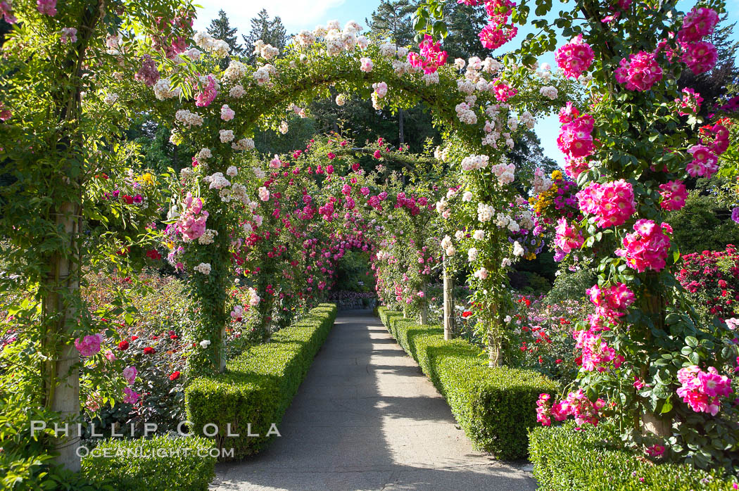 Butchart Gardens, a group of floral display gardens in Brentwood Bay, British Columbia, Canada, near Victoria on Vancouver Island. It is an internationally-known tourist attraction which receives more than a million visitors each year., natural history stock photograph, photo id 21139