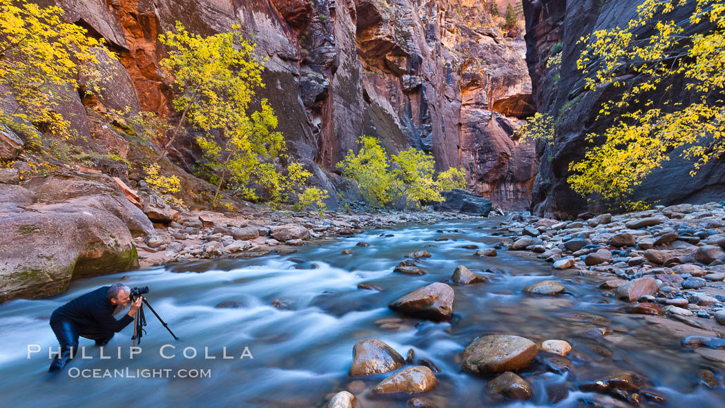 Image 26106, Photographer in the Virgin River Narrows, with flowing water, autumn cottonwood trees and towering red sandstone cliffs. Virgin River Narrows, Zion National Park, Utah, USA, Phillip Colla, all rights reserved worldwide. Keywords: autumn, canyon, canyoneering, cottonwood, fall, fall colors, gorge, hike, hiker, hiking, national parks, outdoors, outside, photographer, rapids, river, sandstone, scene, scenic, stream, tree, usa, utah, virgin river, virgin river narrows, water, zion national park.