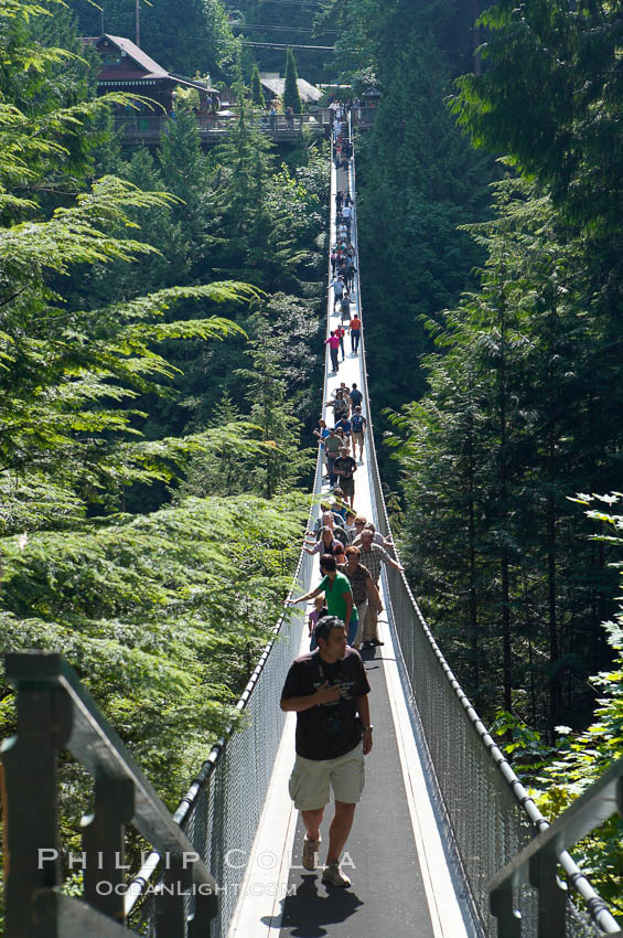 Image 21151, Capilano Suspension Bridge, 140 m (450 ft) long and hanging 70 m (230 ft) above the Capilano River.  The two pre-stressed steel cables supporting the bridge are each capable of supporting 45,000 kgs and together can hold about 1300 people. Capilano Suspension Bridge, Vancouver, British Columbia, Canada, Phillip Colla, all rights reserved worldwide. Keywords: british columbia, canada, capilano suspension bridge, douglas fir, vancouver, western hemlock.