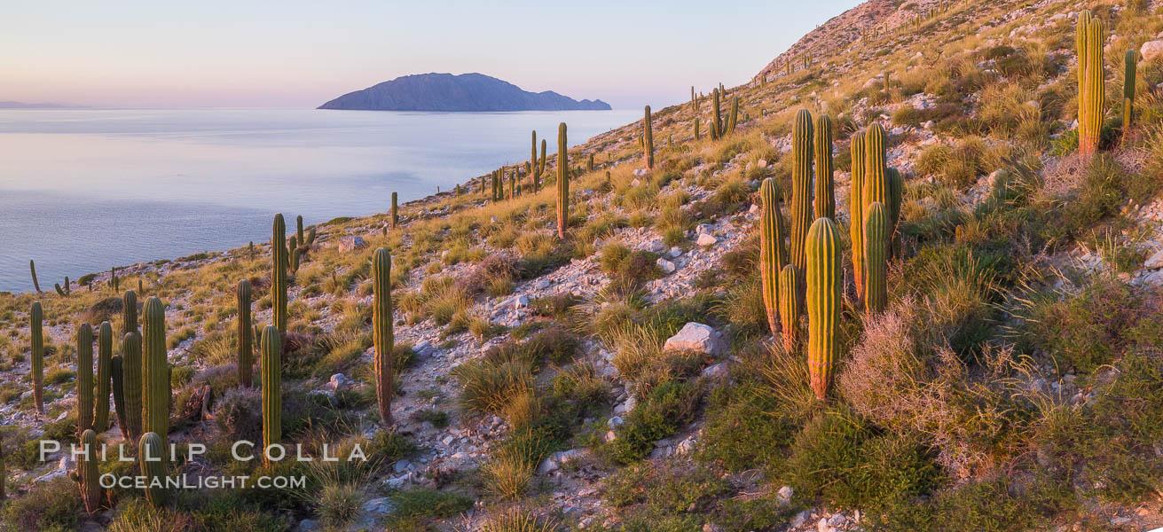 Cardon Cactus on Isla San Diego, Aerial View, Baja California. Isla San Diego, Baja California, Mexico, natural history stock photograph, photo id 33576