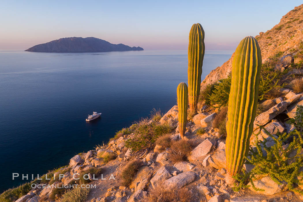 Cardon Cactus on Isla San Diego, Aerial View, Baja California. Isla San Diego, Baja California, Mexico, natural history stock photograph, photo id 33575