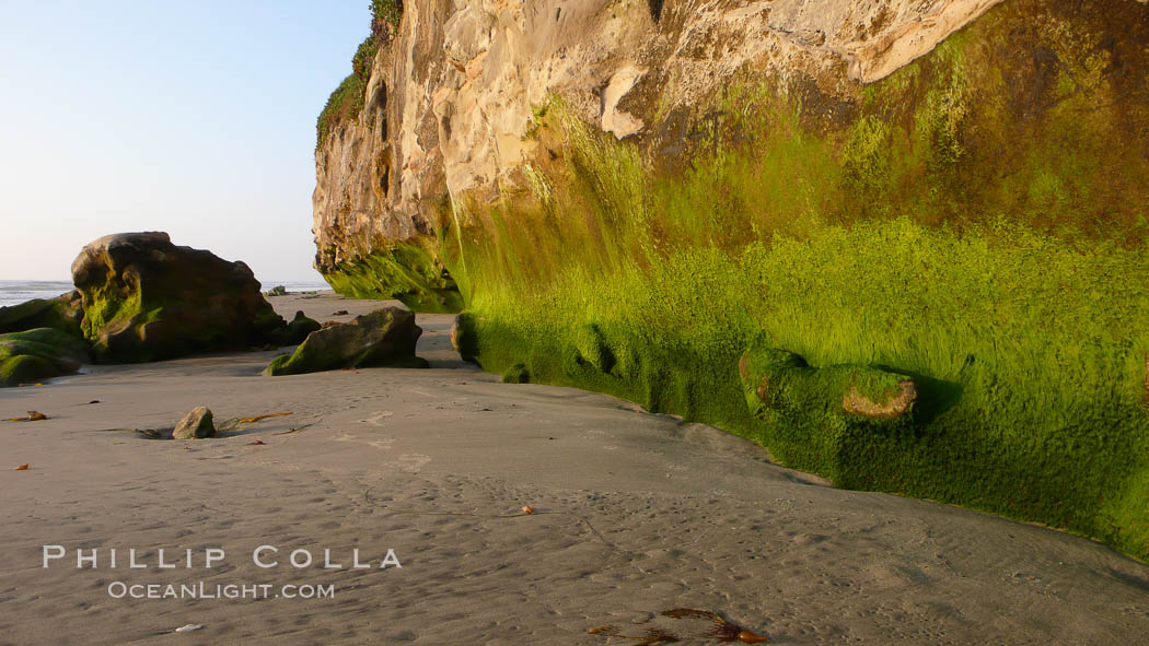 Algae grows along the base of soft eroded sandstone cliffs at the beach. Carlsbad, California, USA, natural history stock photograph, photo id 19813