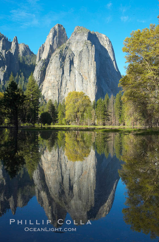 Cathedral Rocks is reflected in flooded El Capitan Meadow, springtime morning.  Yosemite Valley. El Capitan, Yosemite National Park, California, USA, natural history stock photograph, photo id 16099