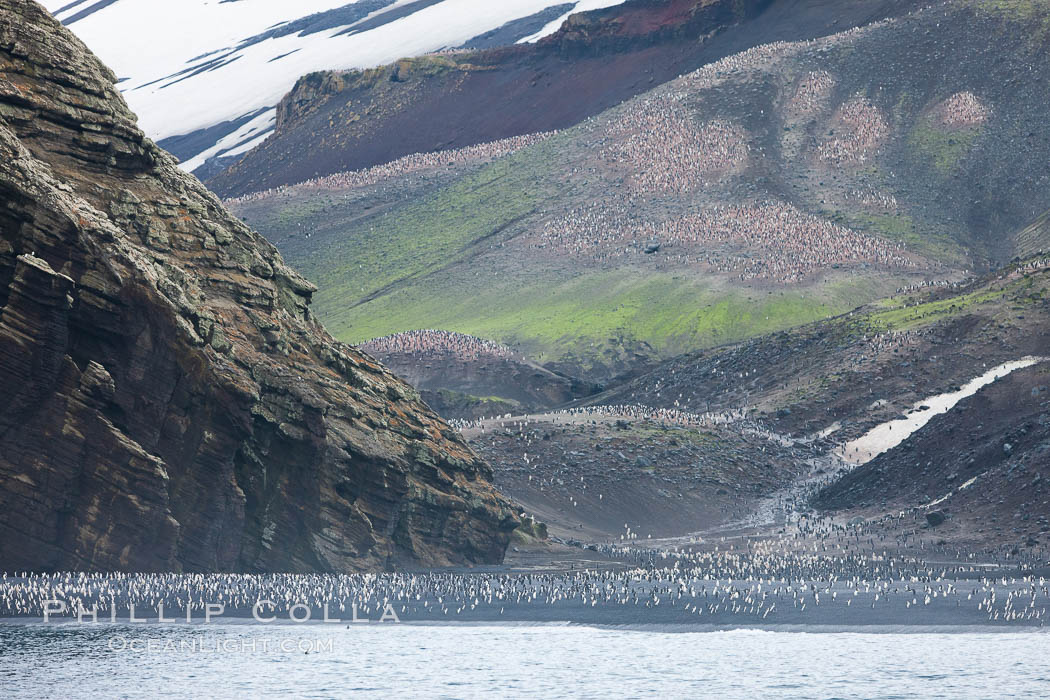 Chinstrap penguins at Bailey Head, Deception Island.  Chinstrap penguins enter and exit the surf on the black sand beach at Bailey Head on Deception Island.  Bailey Head is home to one of the largest colonies of chinstrap penguins in the world. Antarctic Peninsula, Antarctica, Pygoscelis antarcticus, natural history stock photograph, photo id 25453