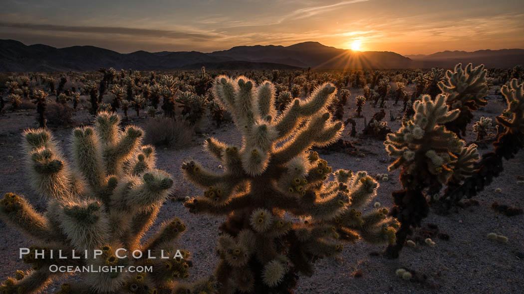 Joshua Tree National Park, California, USA, natural history stock photograph, photo id 28426