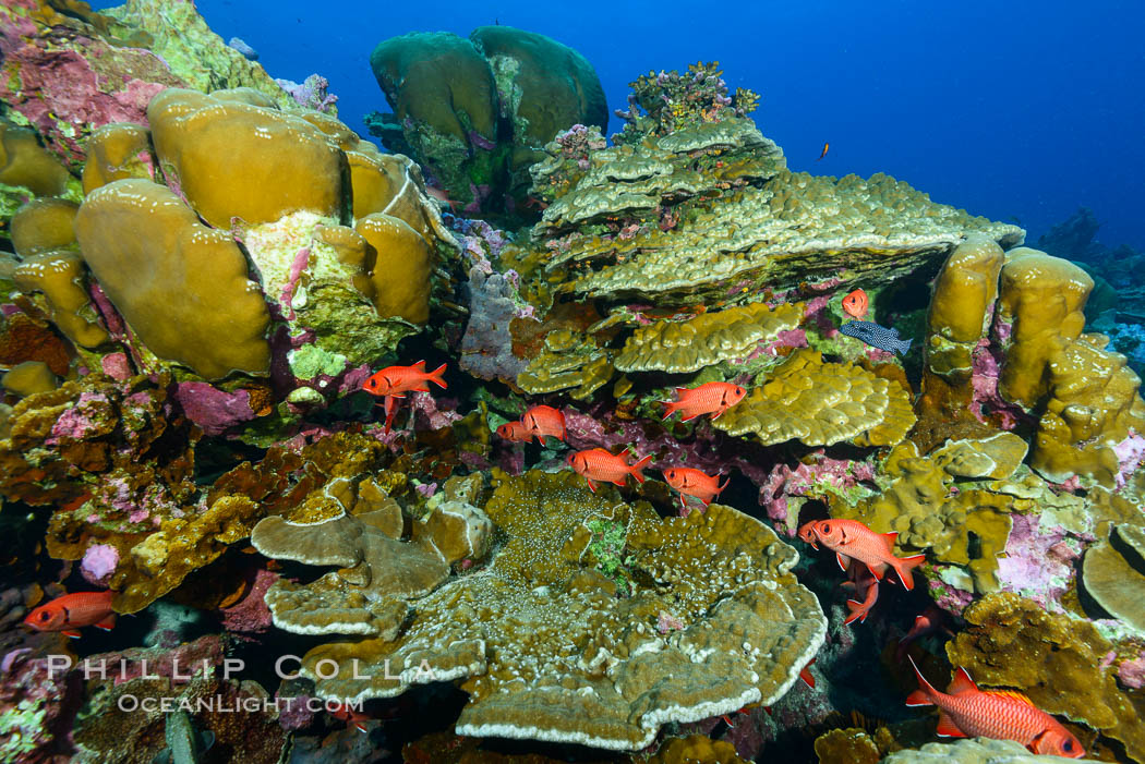 Clipperton Island coral reef, Porites sp. France, Porites lobata, Porites arnaudi, natural history stock photograph, photo id 32959