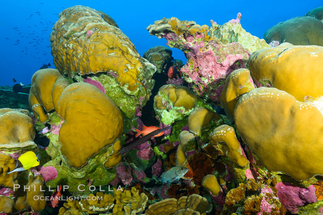 Coral Reef, Clipperton Island. Clipperton Island, France, natural history stock photograph, photo id 33000