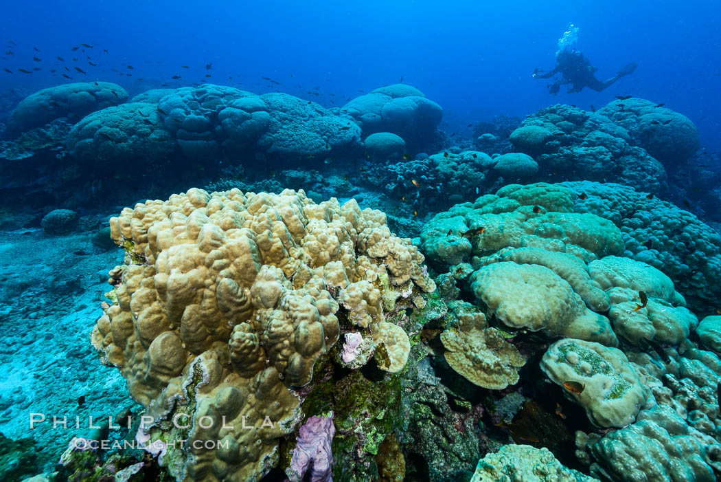 Coral Reef, Clipperton Island. Clipperton Island, France, natural history stock photograph, photo id 33011