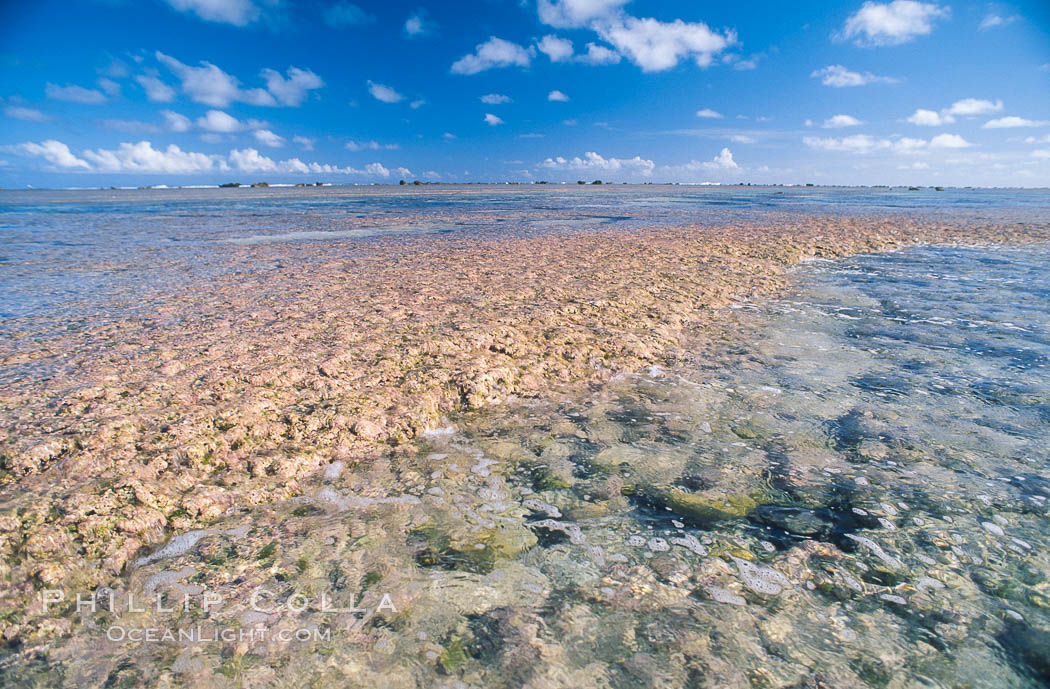 Porolithon coralline algae reef, Rose Atoll, American Samoa. Rose Atoll National Wildlife Sanctuary, USA, natural history stock photograph, photo id 00726